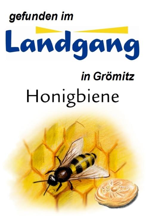 Honigbiene 125g