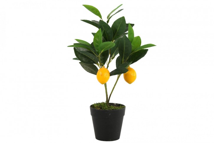 Citrus mitis grün