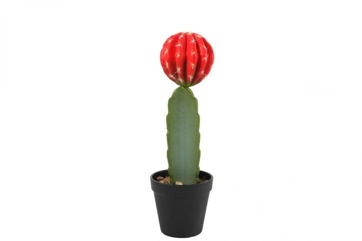 Cactaceaeim Topf Fernley S rot