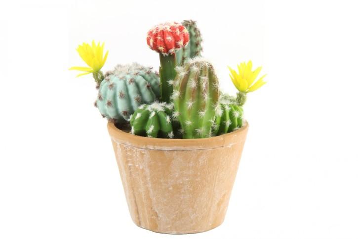 Cactaceae grün