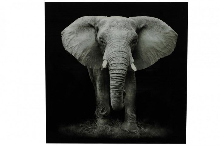 Gemälde Elefant B kwa Wild life L schwarz/weiß